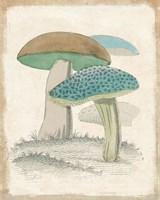 Funghi Italiani Mushrooms Framed Print