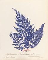 Botanical Fern XVIII Blue Fine Art Print