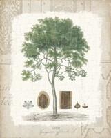 Garden Trees I - Tropical Gayc Tree Framed Print
