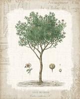 Garden Trees I - Ciste de Crete Framed Print