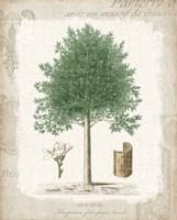 Garden Trees I - Angusture Framed Print
