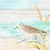 Sandpiper Beach IV Fine Art Print