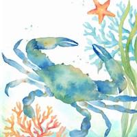 Sea Life Serenade II Fine Art Print