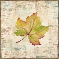Nature Walk Leaves III Fine Art Print