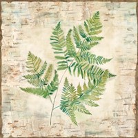Birch Bark Ferns I Fine Art Print