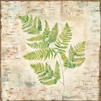 Birch Bark Ferns II Fine Art Print
