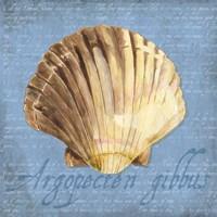 Oceanum Shells Blue V Fine Art Print