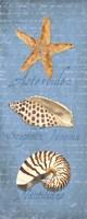 Oceanum Shell Panel Blue II Fine Art Print