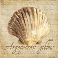 Oceanum Shells Beige V Framed Print