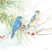 Winter Birds III Bluebirds Fine Art Print
