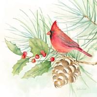 Winter Birds IV Cardinal Fine Art Print