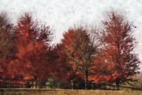 Fall Reds Fine Art Print