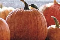 Fall Pumpkin Fine Art Print