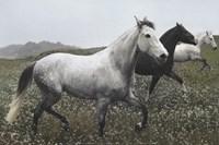 Perfect Pasture Fine Art Print