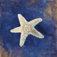 Treasures from the Sea Indigo IV Framed Print