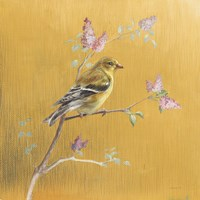 Female Goldfinch on Gold Fine Art Print