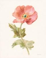 Garden Poppy Framed Print