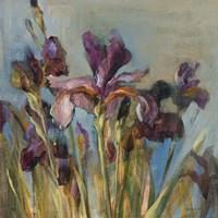 Spring Iris I Fine Art Print
