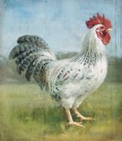 Noble Rooster IV v.2 Vintage No Border Framed Print