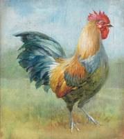 Noble Rooster III Vintage No Border Framed Print