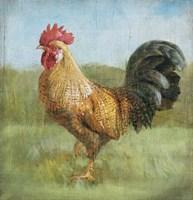Noble Rooster II Vintage No Border Framed Print