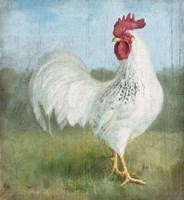Noble Rooster I Vintage No Border Framed Print
