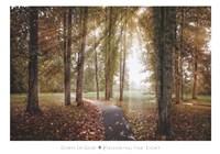 Following The Light Fine Art Print
