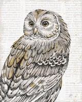 Beautiful Owls III Fine Art Print