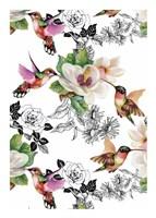 Colibris Fine Art Print