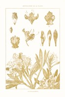 Golden Rhododendron on White Fine Art Print