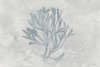 Water Coral III Fine Art Print