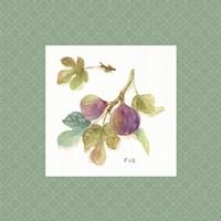 Orchard Bloom III Border Framed Print