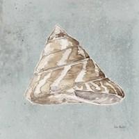 Sand and Seashells IV Framed Print