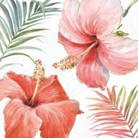 Tropical Blush III Fine Art Print