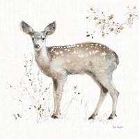 A Woodland Walk IX Fine Art Print