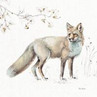 A Woodland Walk XI Fine Art Print