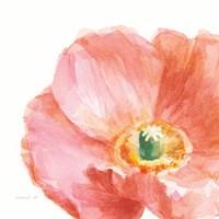 Garden Poppy Flipped on White Crop Fine Art Print