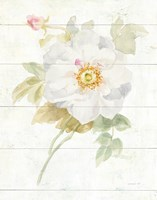 June Blooms III Framed Print