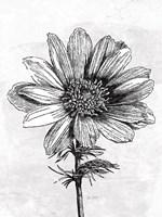 Spa Botanical IV BW Crop Fine Art Print