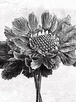 Spa Botanical I BW Crop Fine Art Print