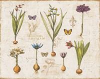 Histoire Naturelle V v2 Fine Art Print