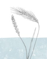 Wheat Fine Art Print