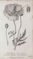 Conversations on Botany V Framed Print