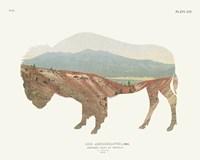 American Southwest Buffalo Fine Art Print