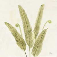 Forest Ferns II v2 Fine Art Print