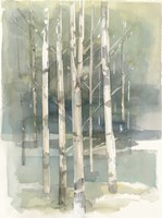 Birch Grove I Fine Art Print