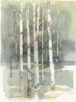 Birch Grove I Fine Art Print