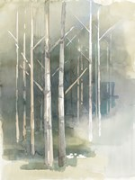 Birch Grove II Framed Print