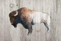 Colorful Bison Dark Brown on Wood Fine Art Print