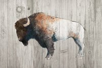 Colorful Bison Dark Brown on Wood Fine Art Print
